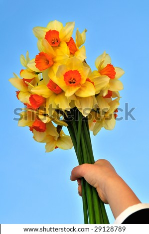 Kid's hand holding a yellow flowers. Mothering Sunday. Day of the Grandmother. - stock photo