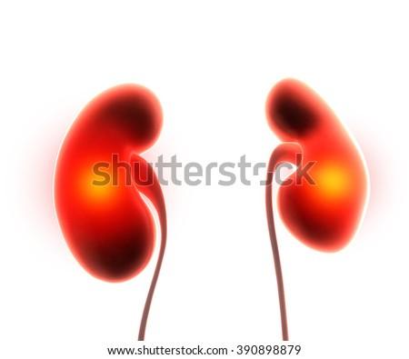 kidneys organ pain - stock photo