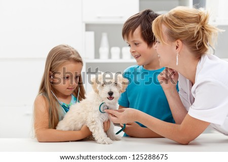 Kids at the veterinary doctor with their pet - checking the dog with a stethoscope - stock photo