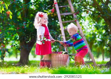 Kids picking cherry on a fruit farm. Children pick cherries in summer orchard. Toddler kid and baby eat fresh fruit from garden tree. Girl and boy eating berry in a basket. Harvest time fun for family - stock photo