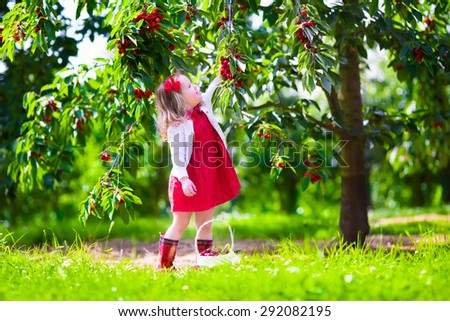 Kids picking cherry on a fruit farm. Children pick cherries in summer orchard. Toddler kid eating fresh fruit from garden tree. Little farmer girl with berry in a basket. Harvest time fun for family - stock photo