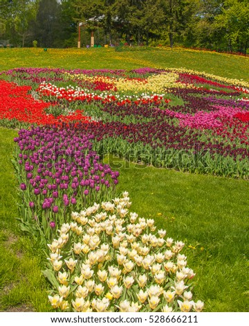 "KIEV, UKRAINE - APR 23: From April 20 to May 29, 2016 on ""Spevoche pole"" in Kiev opened 61 exhibition of flowers, tulip festival ""Flower of the river"" is used 250 thousand tulips in Kiev, Ukraine"