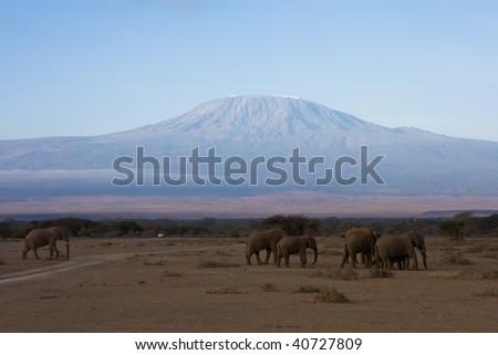 Kilimanjaro and the elefants - stock photo