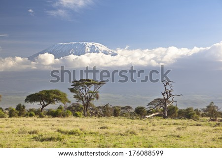 Kilimanjaro with snow cap seen from Amboseli National Park in Kenya. - stock photo