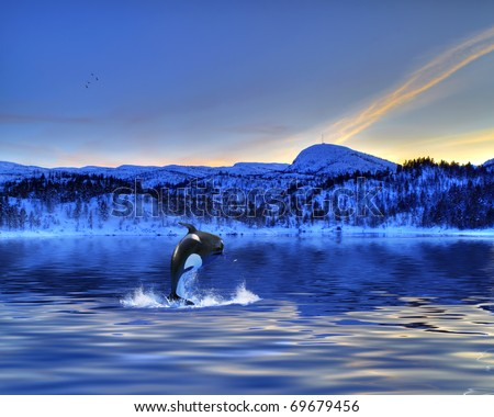 Killer Whale - stock photo