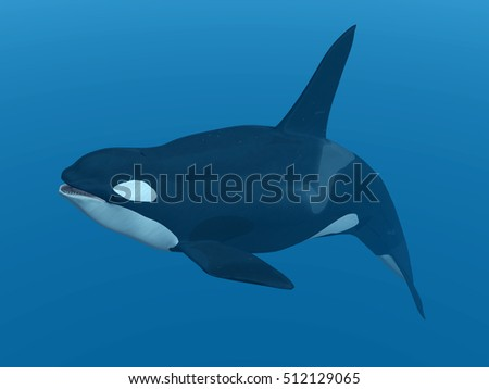 Killer whale Computer generated 3D illustration