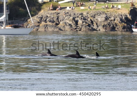 killer whale in Vancouver in Canada - stock photo