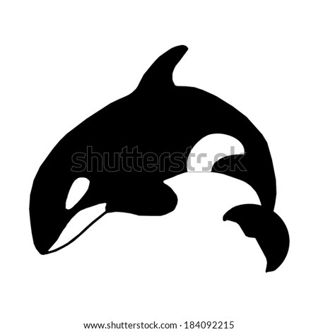 Killer Whale or Orca illustration - stock photo