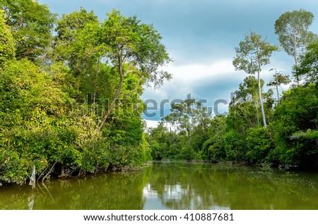 Kinabatangan river, Malaysia, rainforest of Borneo island  - stock photo