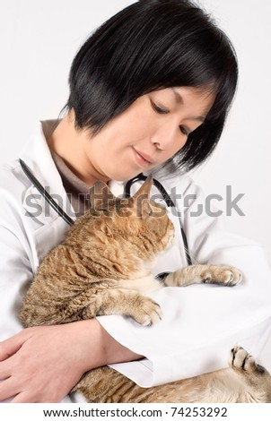 Kindly doctor of pet holding cat and looking and checking, half length closeup portrait on white background.