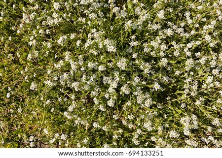 Kinds small white flowers meadow note stock photo image royalty kinds of small white flowers in the meadow note shallow depth of field mightylinksfo