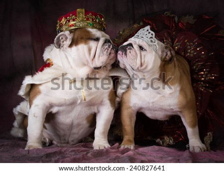 king and queen - two english bulldogs dress like a king and queen - stock photo