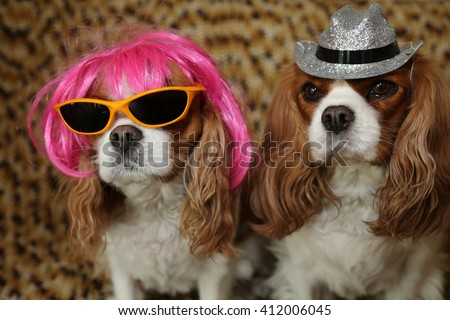King Charles Spaniels wearing a Hot Pink Wig with yellow sunglasses and a silver hat for a dog fashion shoot.  - stock photo
