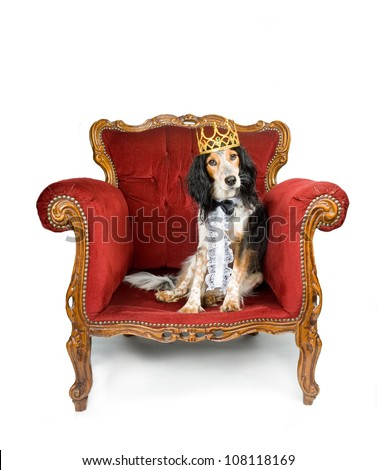 King dog sitting in his throne - stock photo