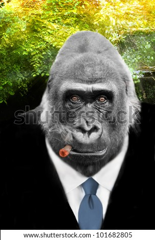 King of the Jungle, A real Gorilla with shrewd eyes in Business Suit smoking Cigar - stock photo
