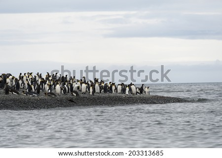King penguins standing on beach, South Georgia, Antarctica