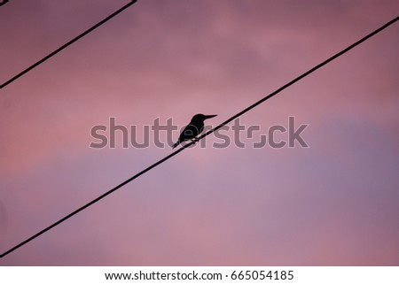 kingfisher silhouette in pink background