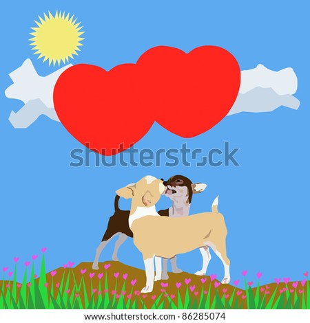 Kissing chihuahua background with blue sky - stock photo