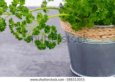 Easy bush cooking recipes