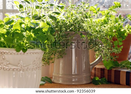 Kitchen herb garden with lemon balm, sage, parsley and thyme potted in decorative canisters and mugs with bright natural backlighting and sunlit raindrops on window pane.  Closeup with shallow dof. - stock photo