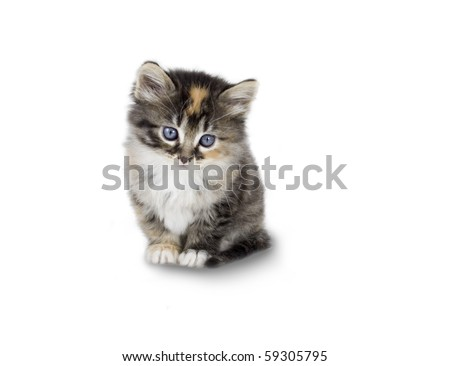Kitten - stock photo
