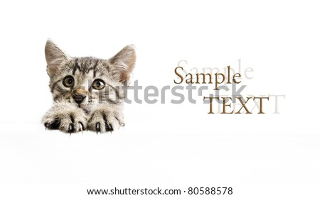 Kitten above white banner isolated on white background with sample text - stock photo