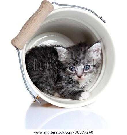 Kitten. Age - 1 month - stock photo