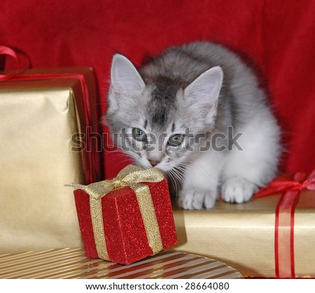 kitten amongst Christmas presents