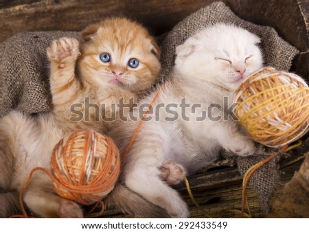 kitten and a ball of yarn - stock photo