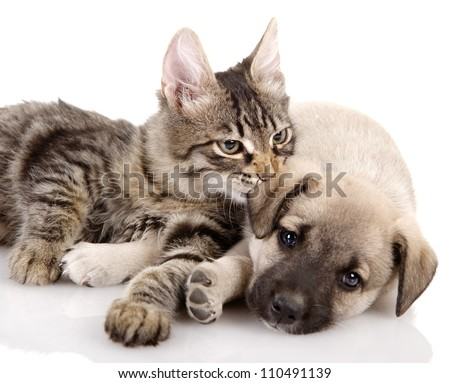 Kitten and a pup together. isolated on white background