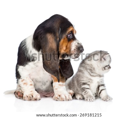 Kitten and basset hound puppy looking to the side. isolated on white background - stock photo