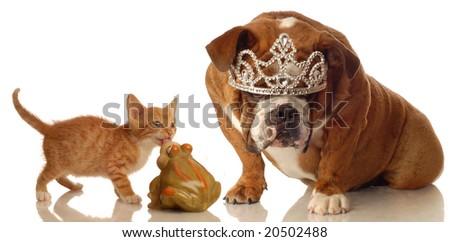 kitten and bulldog set up like concept of fairytale sleeping beauty - stock photo