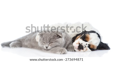 kitten and Cocker Spaniel  puppy sleeping together. isolated on white background - stock photo