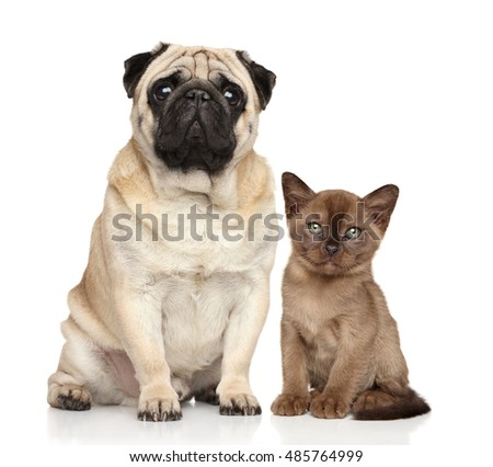Kitten and dog together on a white background