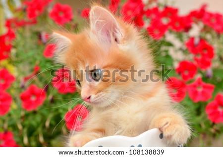 kitten and flower - stock photo