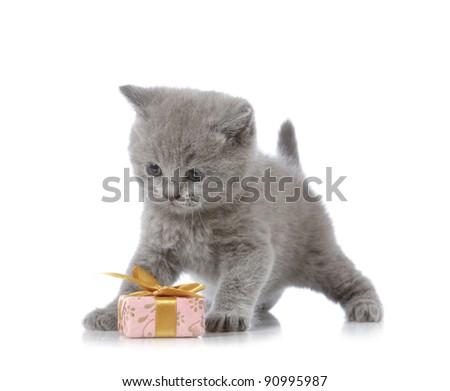 kitten and gift box - stock photo