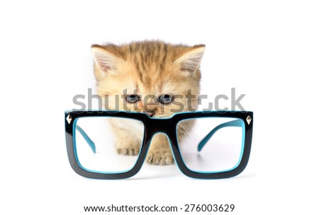 Kitten and glasses on white background. - stock photo