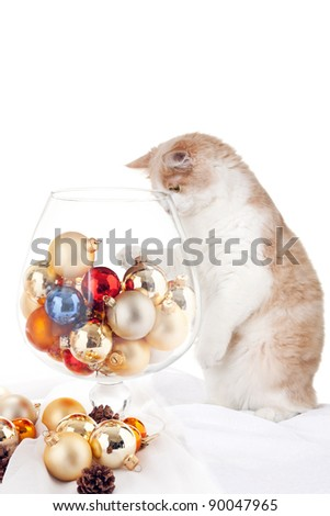 Kitten and large cognac glass - stock photo