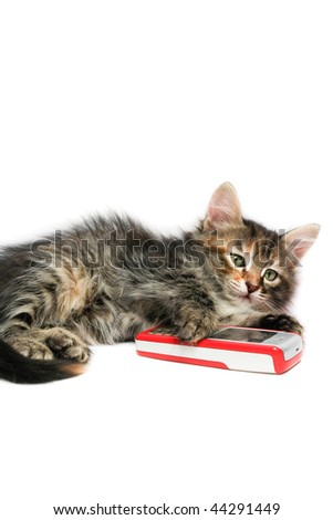 Kitten and mobile phone - stock photo