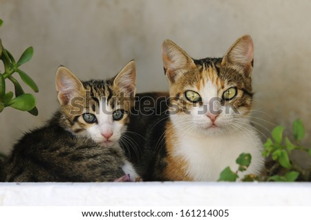 Kitten and mother cat side by side,Cyclades,Greece