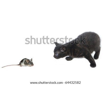 kitten and  mouse on white background - stock photo