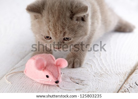 kitten and pink mouse - stock photo