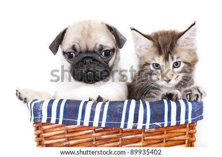 kitten and puppy - stock photo