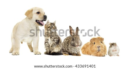 kitten and puppy and bunny