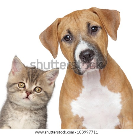 Kitten and puppy. Close up portrait on white background