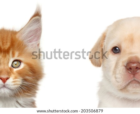 Kitten and puppy. Half of muzzle close-up portrait on a white background - stock photo