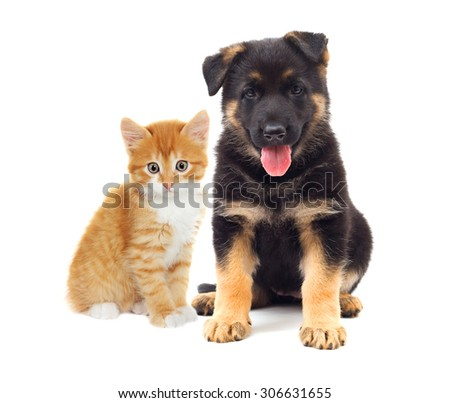 kitten and puppy looking, on a white background - stock photo