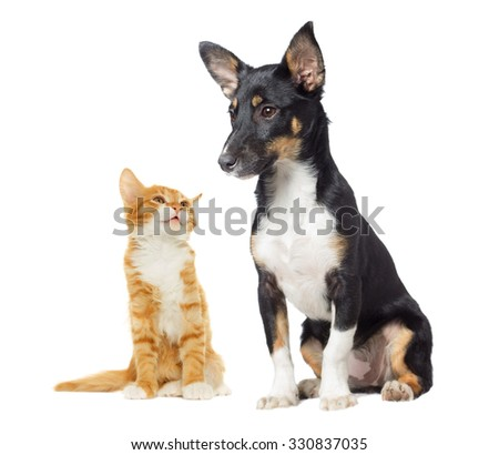 kitten and puppy  looking on white background - stock photo