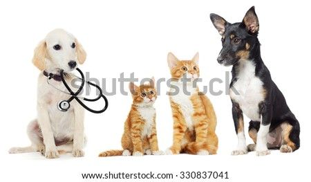 Kitten and Puppy looking on white background