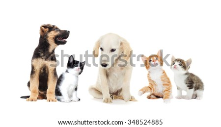 kitten and puppy looking up on a white background
